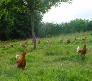 Production locale - Labels volailles