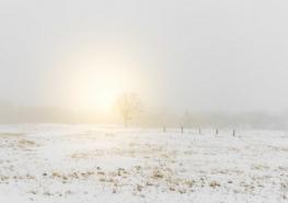 Paysage allier neige 2017 - La neige protège les cultures